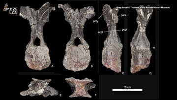 168-Million-Year-Old Stegosaur Species is Oldest Found