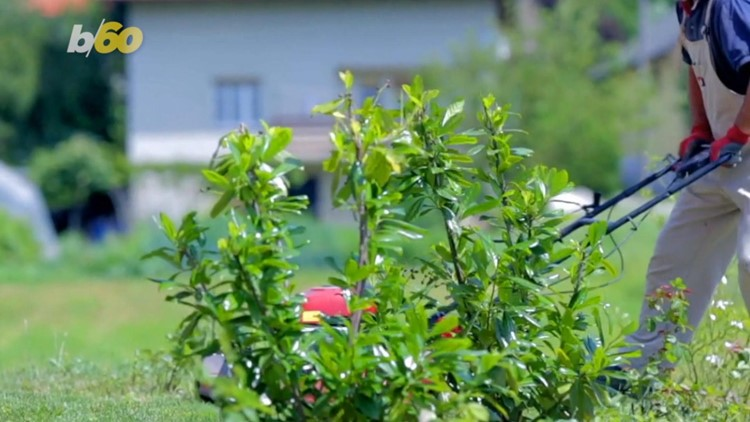 Doing THIS with Your Grass Clippings Could Be Keeping You from Having the Perfect Lawn