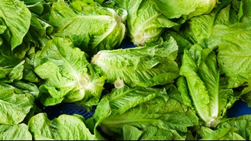 More than 100 sickened by latest romaine lettuce E. coli outbreak