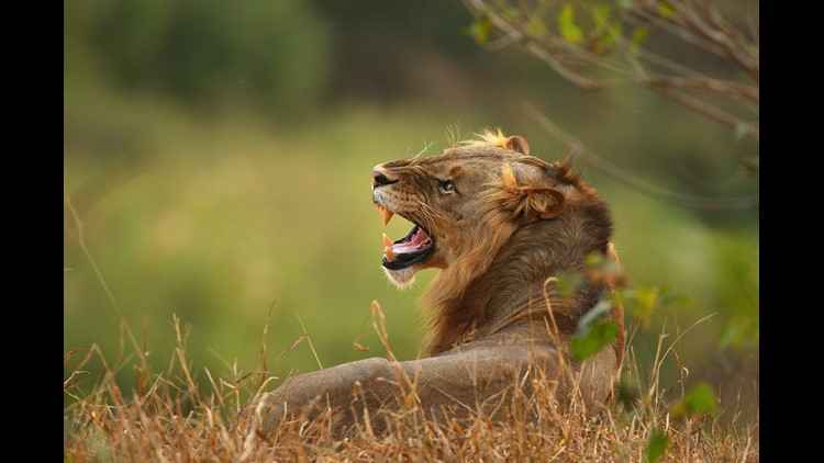Staff at a South African game reserve found what appeared to be human remains and hunting gear at the park on Tuesday.