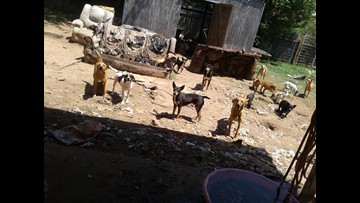 Hearne rescue works to save 30 dogs after owner died