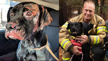 Dog injured in fire adopted by firefighter - to help other burn victims