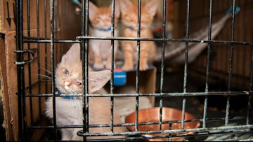200 neglected cats, dogs removed from Central Texas home