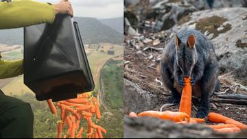 Australian government drops food in effort to help wildlife impacted by bushfires
