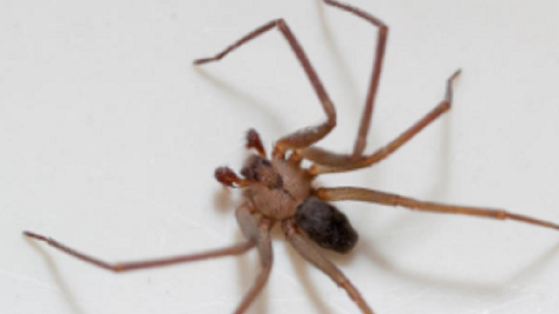 Woman thought she had water in her ear, doctors pulled out a spider