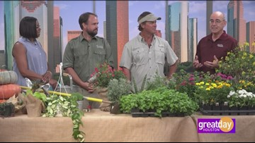 Gardening Show Q&A Part 4 with Dany Millikin, Joey Lenderman and Skip Richter
