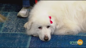 Faithful Paws bring unconditional love to those in need