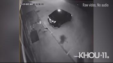 Watch: $44,000 worth of puppies stolen in Houston