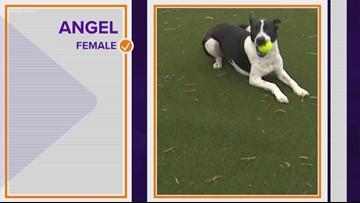 Pet of the Week: Meet Angel