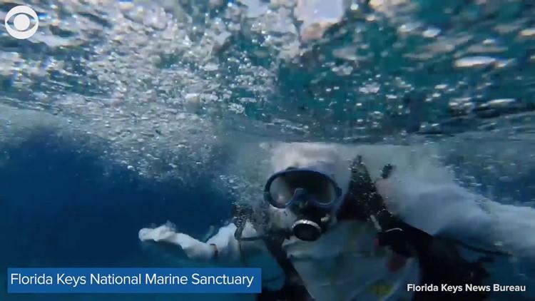Underwater Easter egg hunt in the Florida Keys