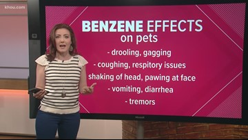How Benzene can effect people and pets