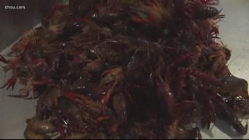 Crawfish in November? Yep. That's right.