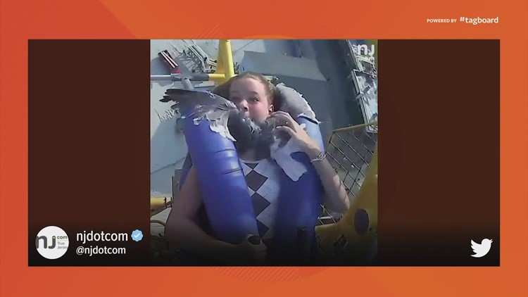 WATCH: Seagull smashes right into girl's face as she was riding a roller coaster