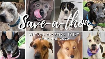 Houston Pets Alive hosting virtual adoption event with drive-thru dog pickup