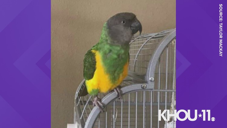 Have you seen Junji? Katy woman searching for missing parrot
