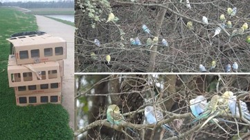 Parakeets found dumped at west Houston park