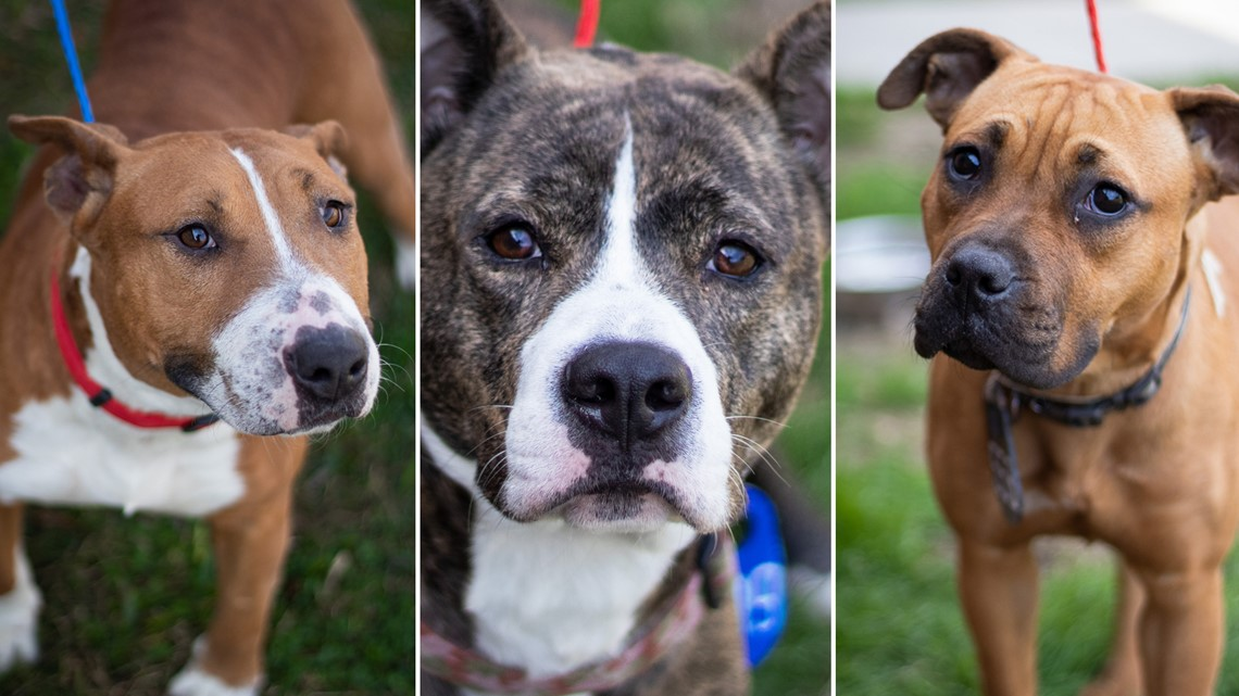 Adoptable Animals: Meet Ella, Snickers & Loli at the Harris County Animal Shelter