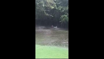 Lap dog: Richmond pooch runs happily through flooded yard