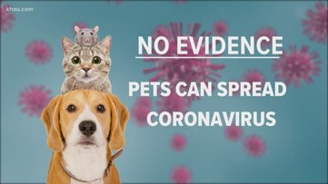 What you need to know about pets and coronavirus