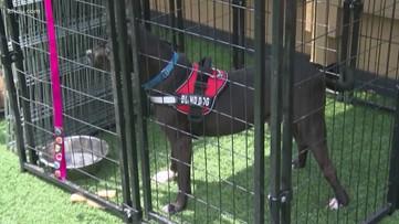 Houston Pets Alive hosts virtual adoption event