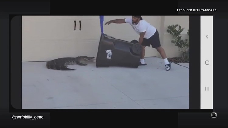 Florida man uses trash can to catch an alligator outside home