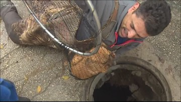 VIDEO: Heroes rescue puppies trapped in storm drain