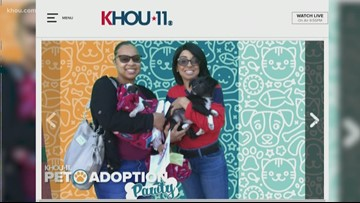 More than 80 pets adopted during KHOU event at Harris Co. Animal Shelter