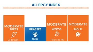 Cedar pollen allergy season arrives in Houston