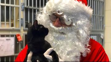 Furever homes for the holidays: Local shelters hosting pet-adoption event