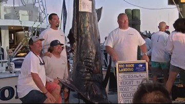 914-pound marlin caught at Florida fishing tournament on Father's Day weekend