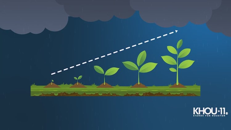 This is how lightning helps plants and grass grow