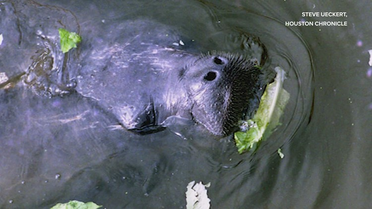 What critters live in Houston's bayous?