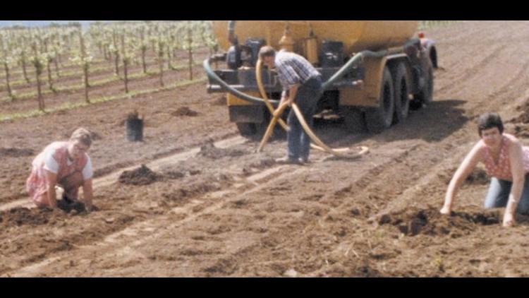Henry Estate planting