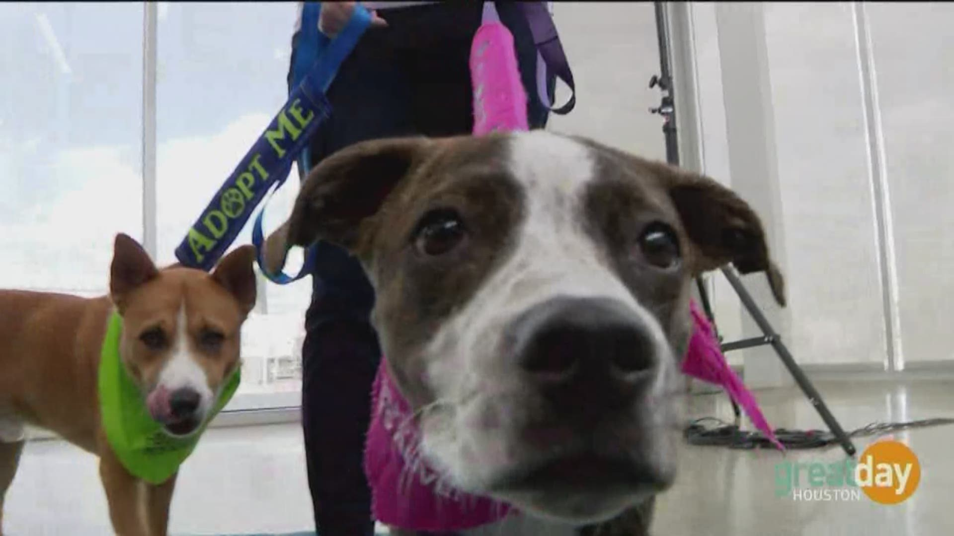 Houston Pets Alive Is Dedicated To Making Houston The Largest No Kill City In The Country Khou Com
