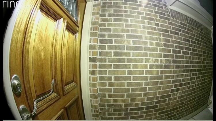 snake on door_1522297316183.JPG.jpg