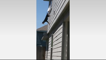 Neighbors rescue dog found hanging from second-story window