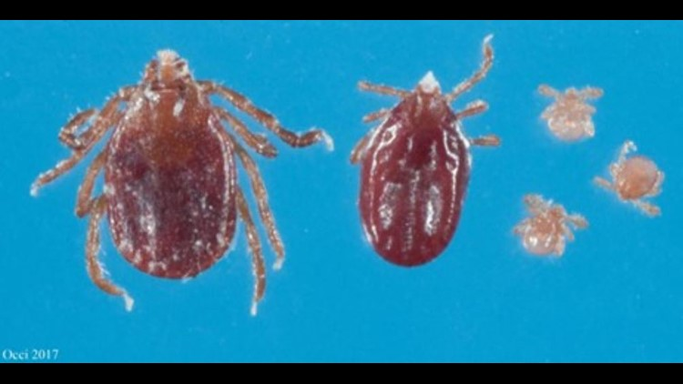 Mystery tick discovered on New Jersey Farm now here to stay