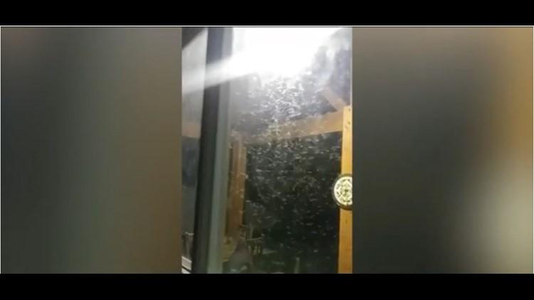 termites_1525662936283.JPG
