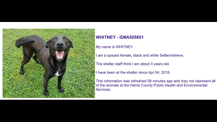 Photos Dogs Cats Available At The Harris County Animal Shelter May 29 2018 Khou Com