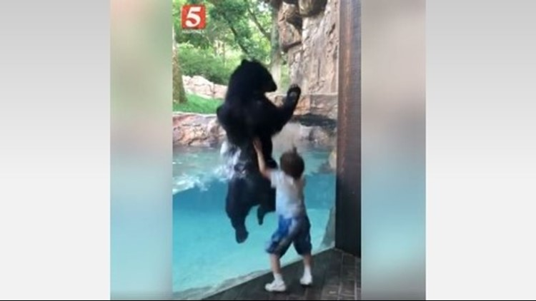 A video of a bear and boy playing copycat at the Nashville Zoo has gone viral.