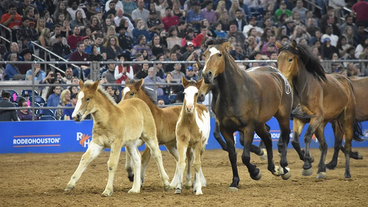 RodeoHouston concert tickets also include the nightly rodeo competition, the Houston Livestock Show and Rodeo, shows at the Horse Arena and entry to the Carnival.