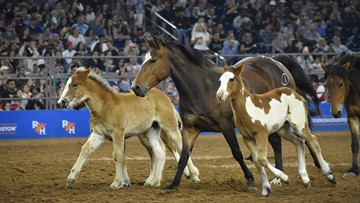 What's new at the 2020 Houston Livestock Show and Rodeo?