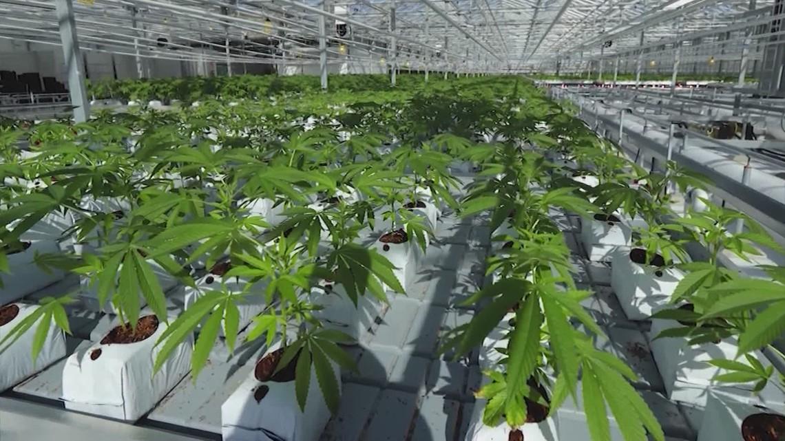Marijuana users celebrate 4/20 as Texas lawmakers consider legislation easing restrictions
