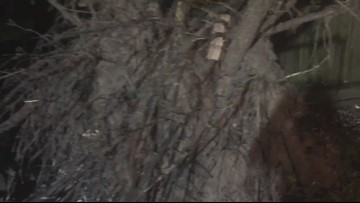 RAW VIDEO:  Downed tree in north Houston