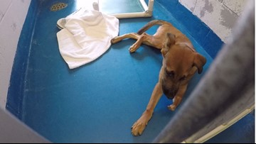 Pearland Animal Control in need of donations