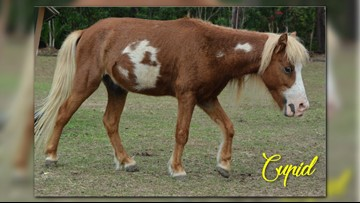 15 horses seized from deplorable conditions available for