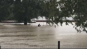 Baby goat, other animals rescued from floodwaters north of Kingwood