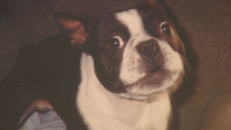 Moco the Boston Terrier passed away in 2000. So imagine MaryAnn's surprise when she found a letter addressed to her deceased dog sitting in the mailbox this week.