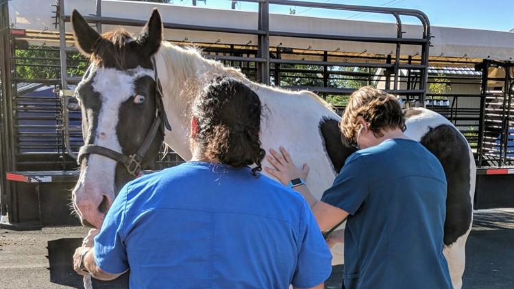 neglected horse2_1539372915939.jpg.jpg