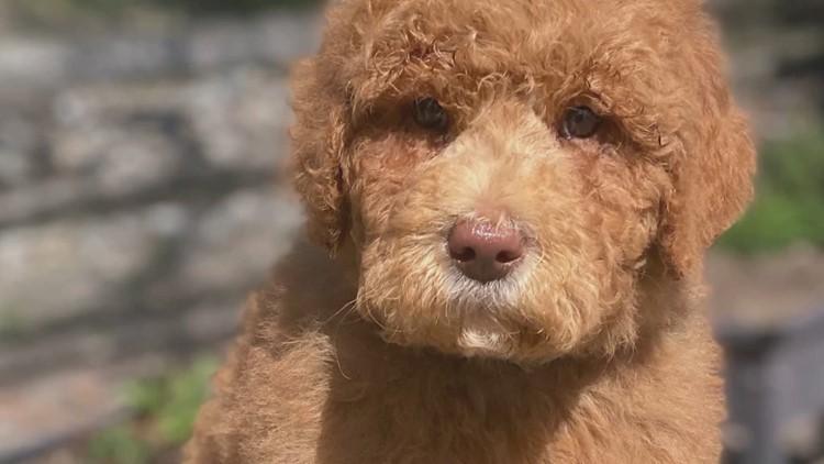 Community raises $38K for 15-year-old's life-saving service dog